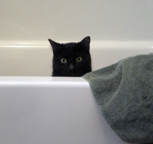 Mewsette's 10 Best Uses for the Bathtub
