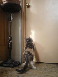 Peaches continues to look at the doorknob.