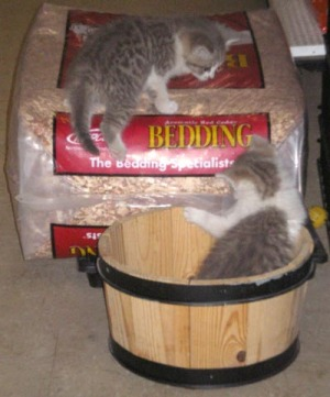 Let's see how it would be if we put the bedding in this bucket and curled up...