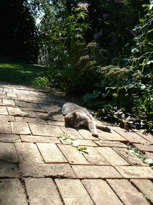 For Moses, the sun-warmed bricks were her treatment of choice for her arthritis.
