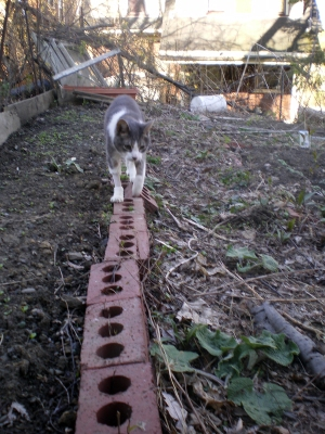 Namir stays carefully on the brick edge after inspecting the new lettuce sprouts.