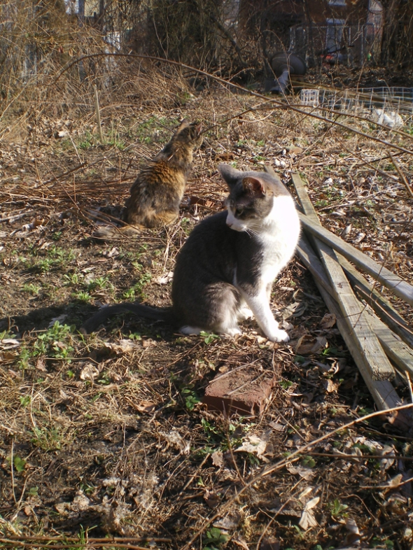 two cats in spring garden