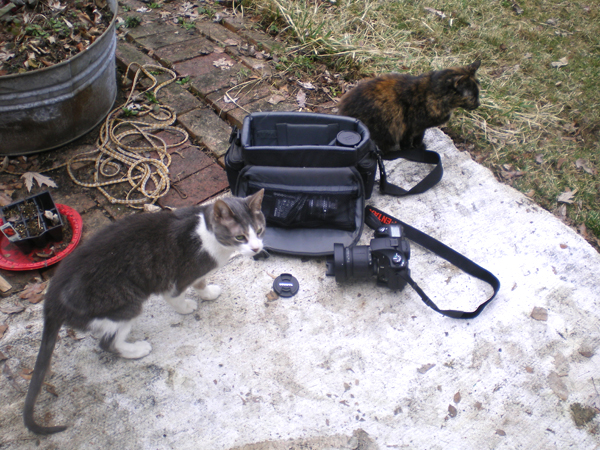 two cats with photo bag