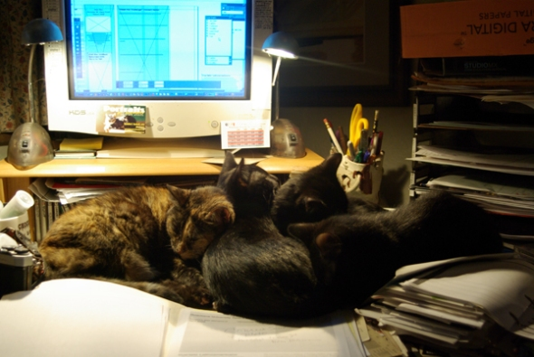 I get some workday assistance from my feline household.