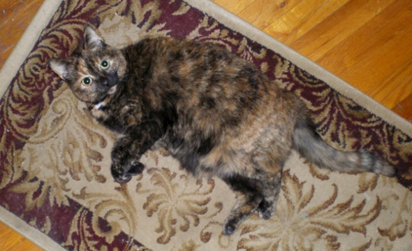 Sweetie on her camouflage rug.