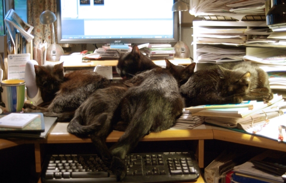 four black cats on desk