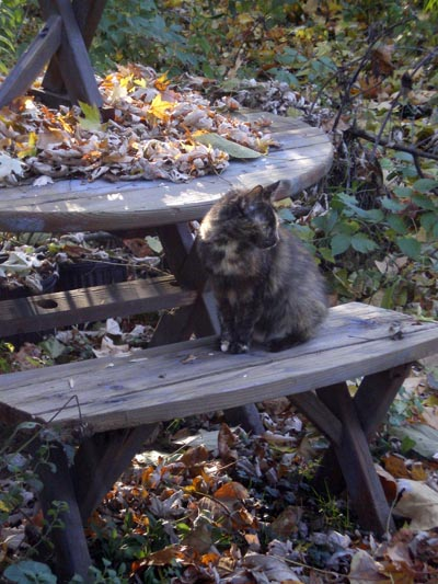Cookie onthe Picnic Bench