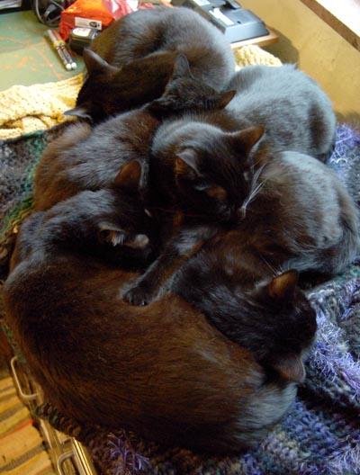 Five black cats sleeping in a heap