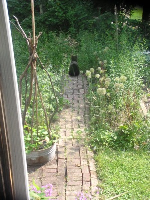 photo of garden with black cat
