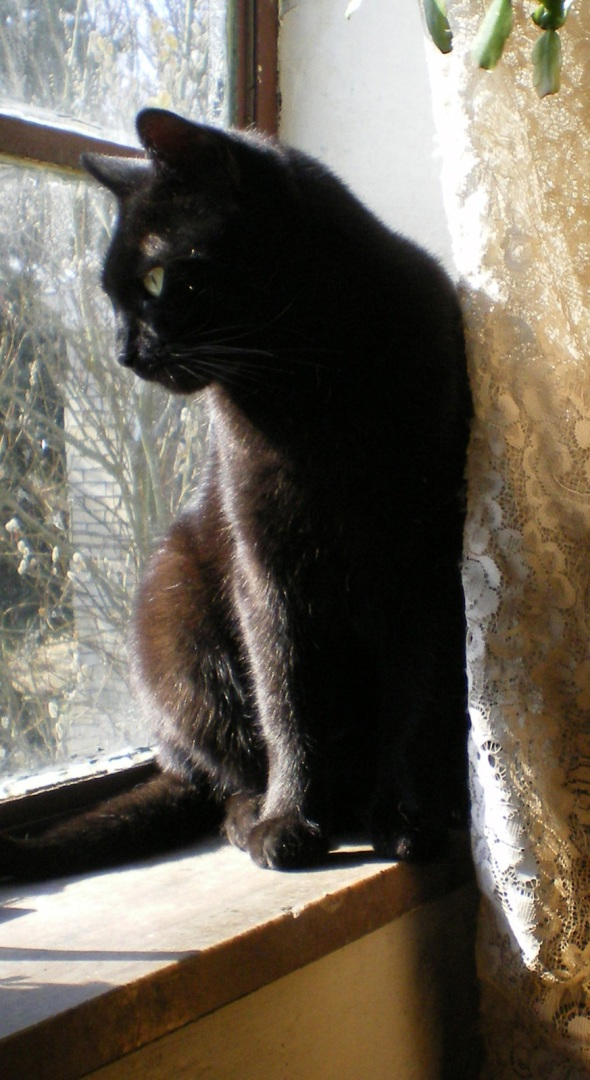 photo of a black cat looking out a window