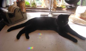 photo of black cat on drawing table