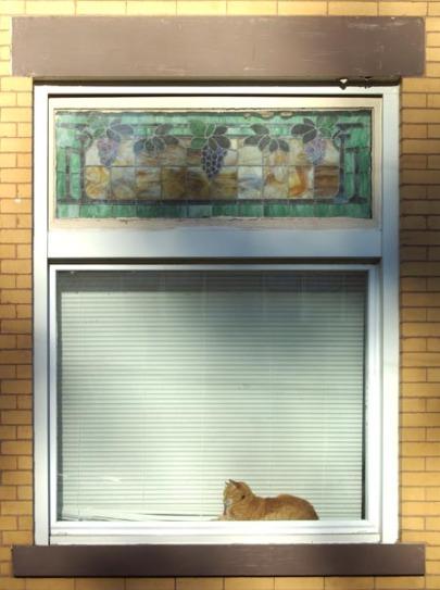 Neighbor's orange cat sleeping on the windowsill