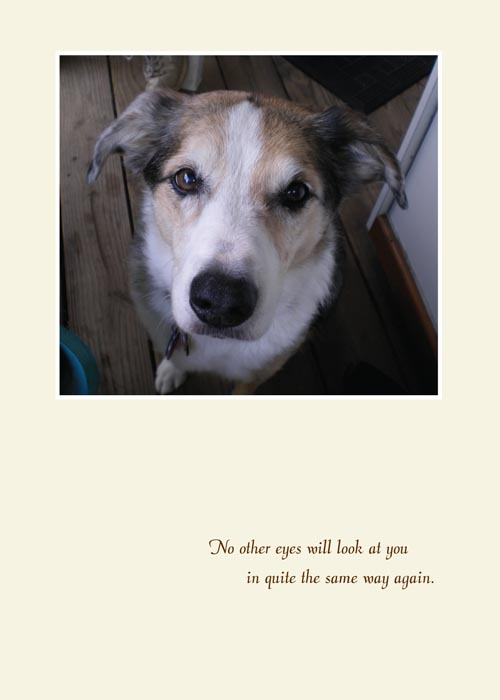 animal sympathy card with dog