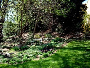 photo of yard in spring with bench under trees