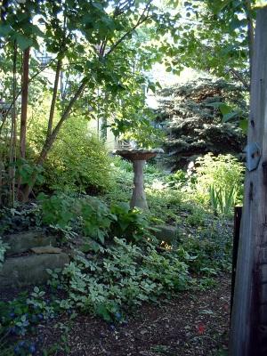 photo of bird bath in garden