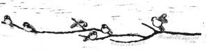 linoleum block print of chickadees on tree branch