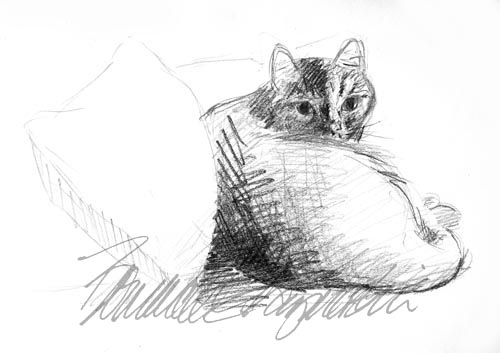 pencil sketch of cat on bed