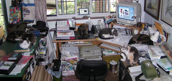 desk with six cats