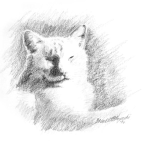 pencil drawing of cat sleeping