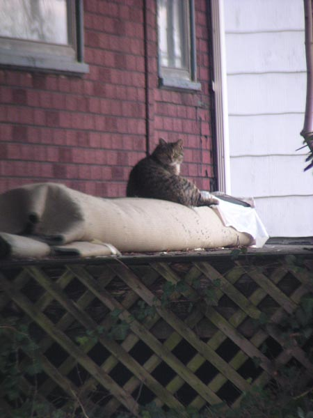tabby cat living at abandoned house