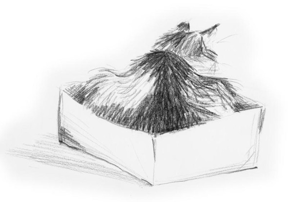 pencil sketch of a cat in a box