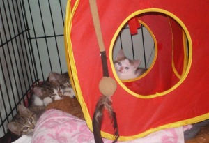 photo of kittens in cage with toys and bedding