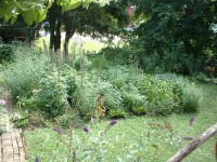 photo of vegetable garden with lawn