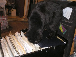 black cat in file drawer