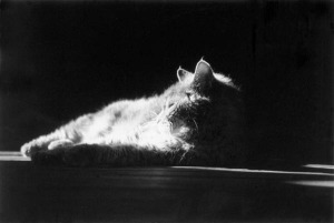 black and white photo of cat on deck