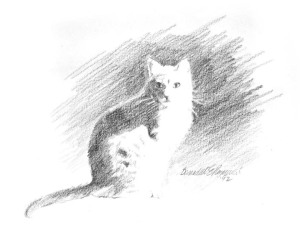 pencil sketch of a cat in sunlight