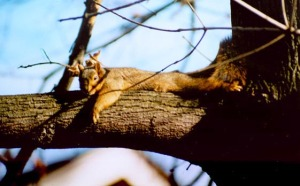 photo of squirrel on tree branch