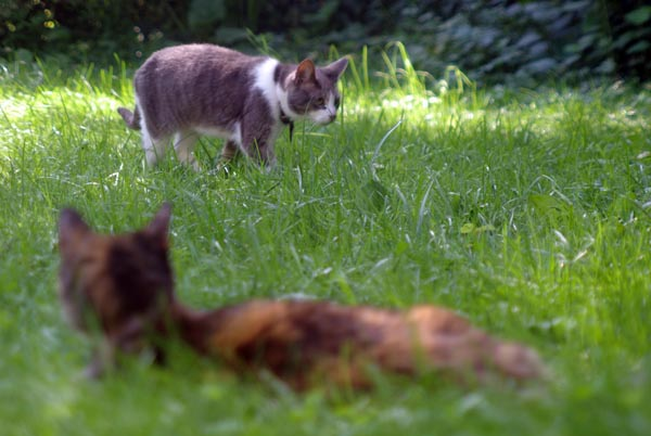 photo of two cats in the grass