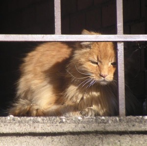 bedraggled orange cat on porch