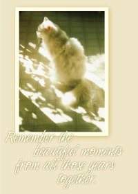 animal sympahty card
