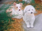 pastel portrait of dogs