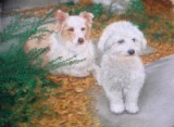 pastel portrait of dogs