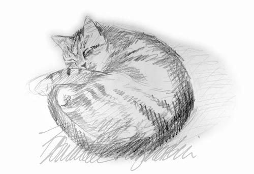 pencil sketch of striped cat sleeping curled