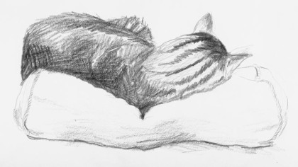 pencil drawing of striped cat