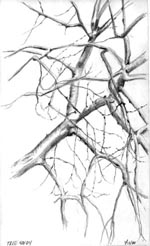 pencil drawing of bare tree branches