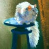 pastel painting of white cat on blue stool