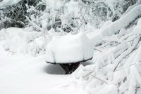 photo of heavy snow on picnic table