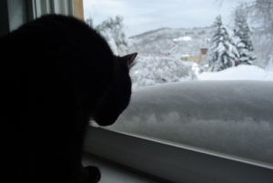 photo of cat sniffing snow