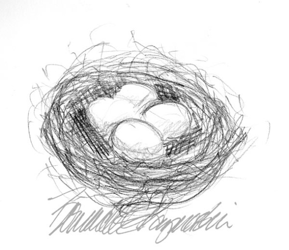 pencil sketch of bird's nest with eggs