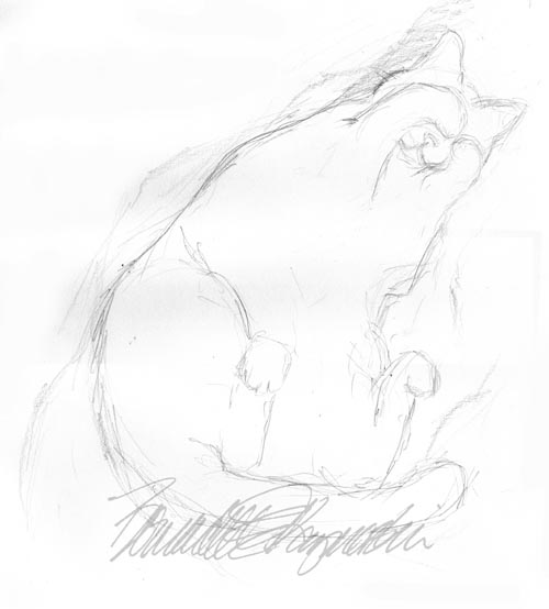 pencil sketch of cat sleeping on her back