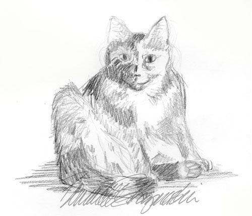 pencil sketch of cat sitting sideways
