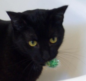 photo of cat with sparkly green ball