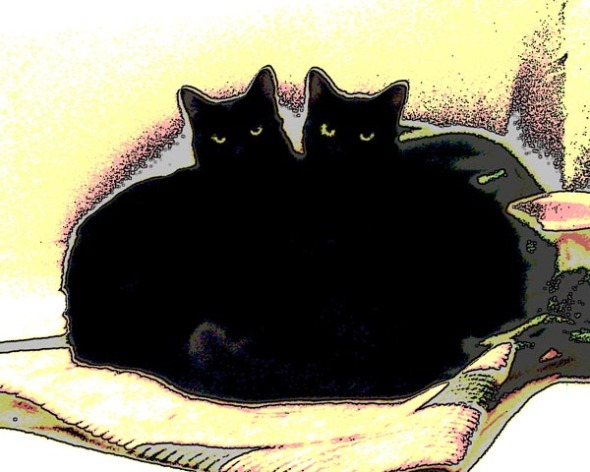 digitized photo of two cats embracing