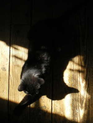 photo of black cat in the sun on a wooden floor