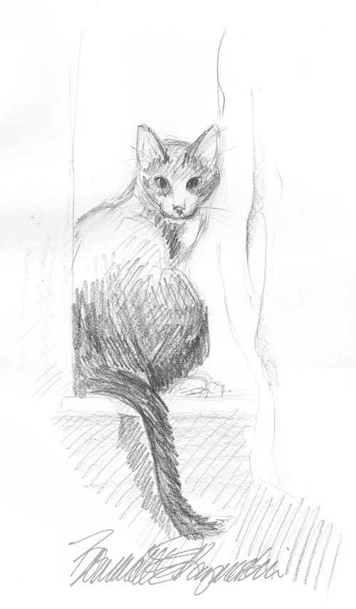 pencil sketch of cat on windowsill