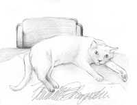 pencil sketch of gray cat on table